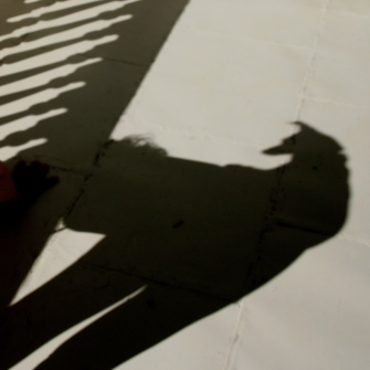 only the shadow knows